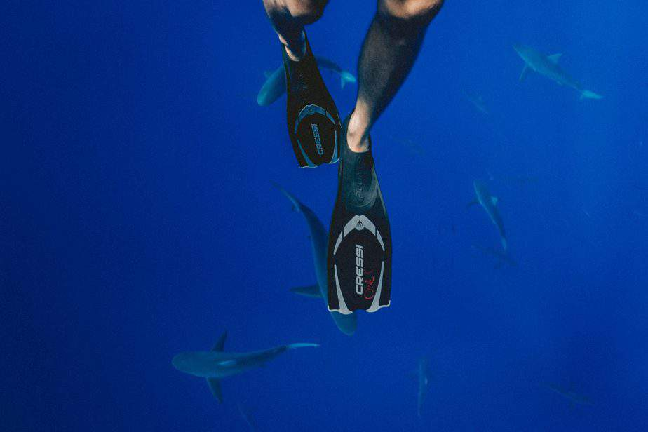 All Type of Fins That Diver Should Know | Best Buying Guides 1